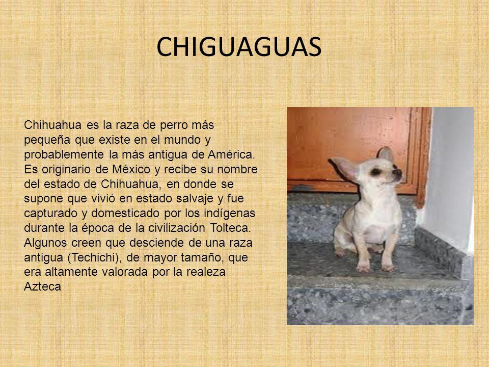 CHIGUAGUAS