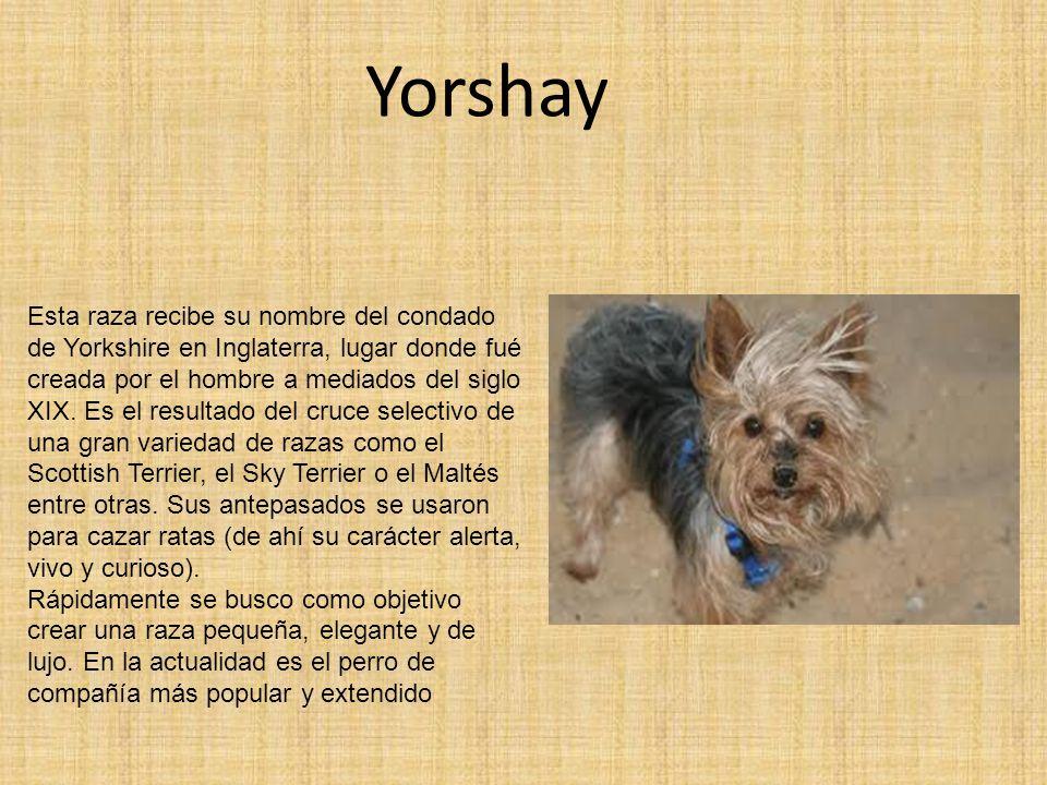 Yorshay