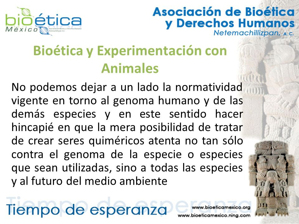 Bioética y Experimentación con Animales