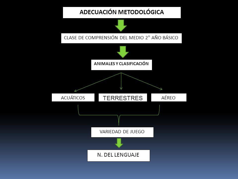 ADECUACIÓN METODOLÓGICA ANIMALES Y CLASIFICACIÓN