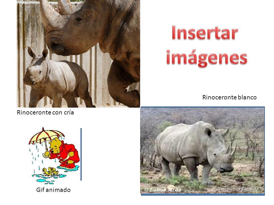 Rinoceronte blanco Rinoceronte con cría Gif animado