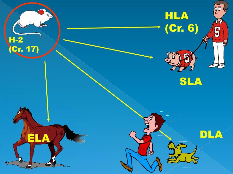 HLA (Cr. 6) SLA H-2 (Cr. 17) DLA ELA