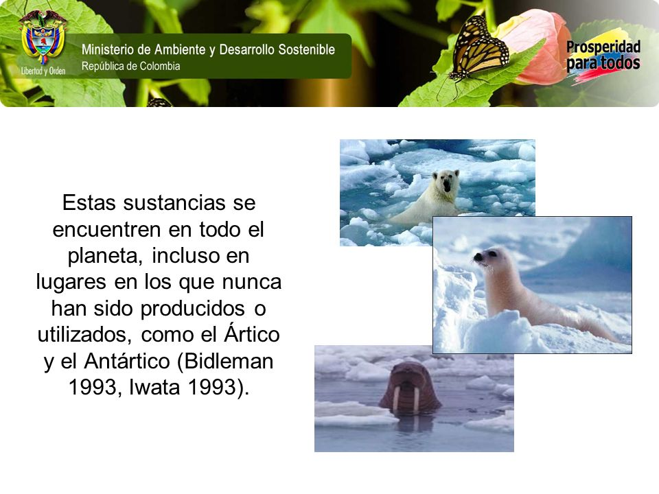 Estas sustancias se encuentren en todo el planeta, incluso en lugares en los que nunca han sido producidos o utilizados, como el Ártico y el Antártico (Bidleman 1993, Iwata 1993).