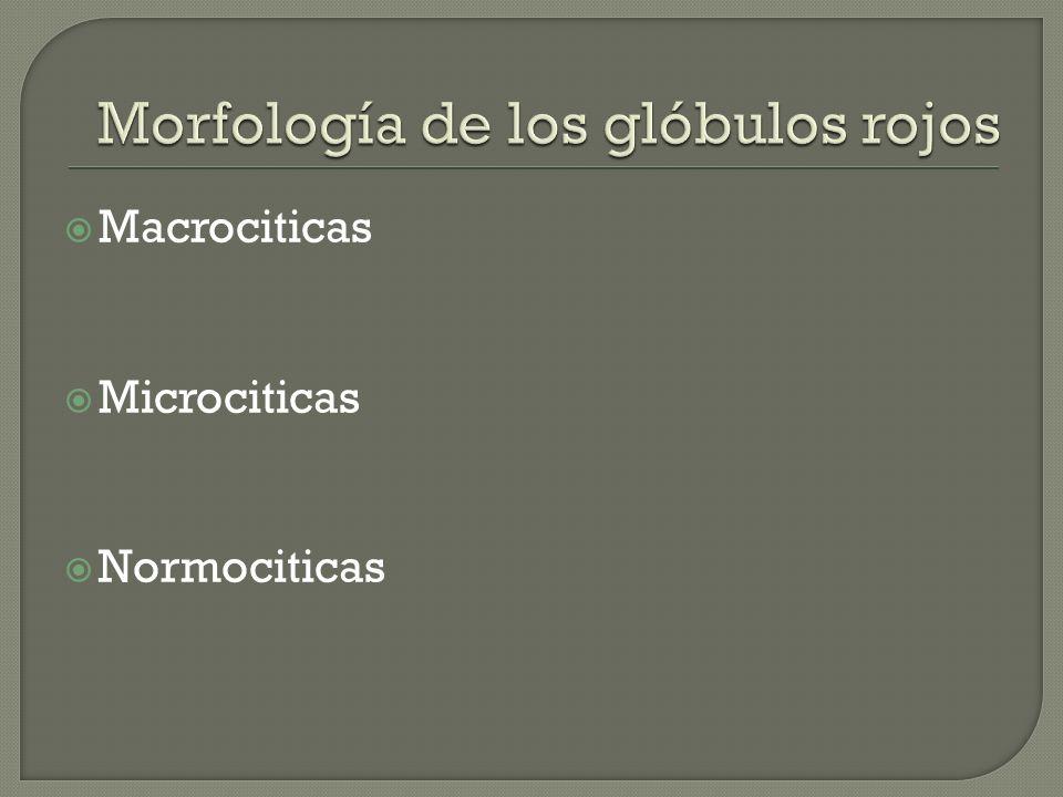Morfología de los glóbulos rojos