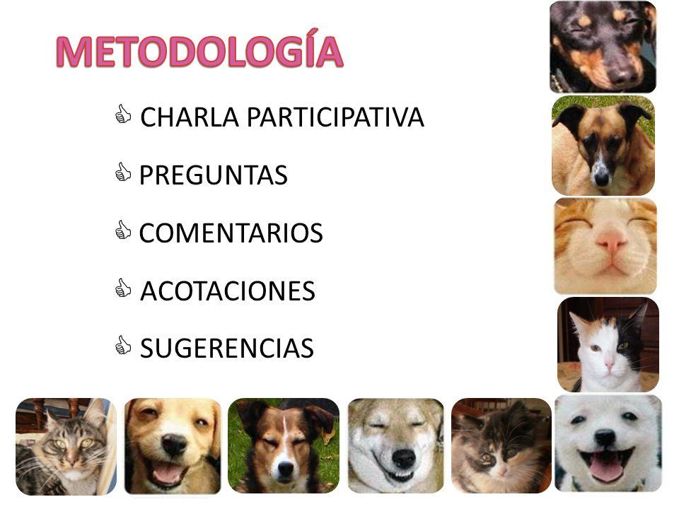 METODOLOGÍA  CHARLA PARTICIPATIVA PREGUNTAS COMENTARIOS  ACOTACIONES
