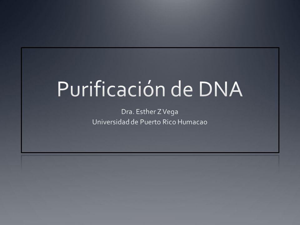 Dra. Esther Z Vega Universidad de Puerto Rico Humacao