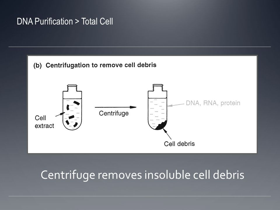 Centrifuge removes insoluble cell debris