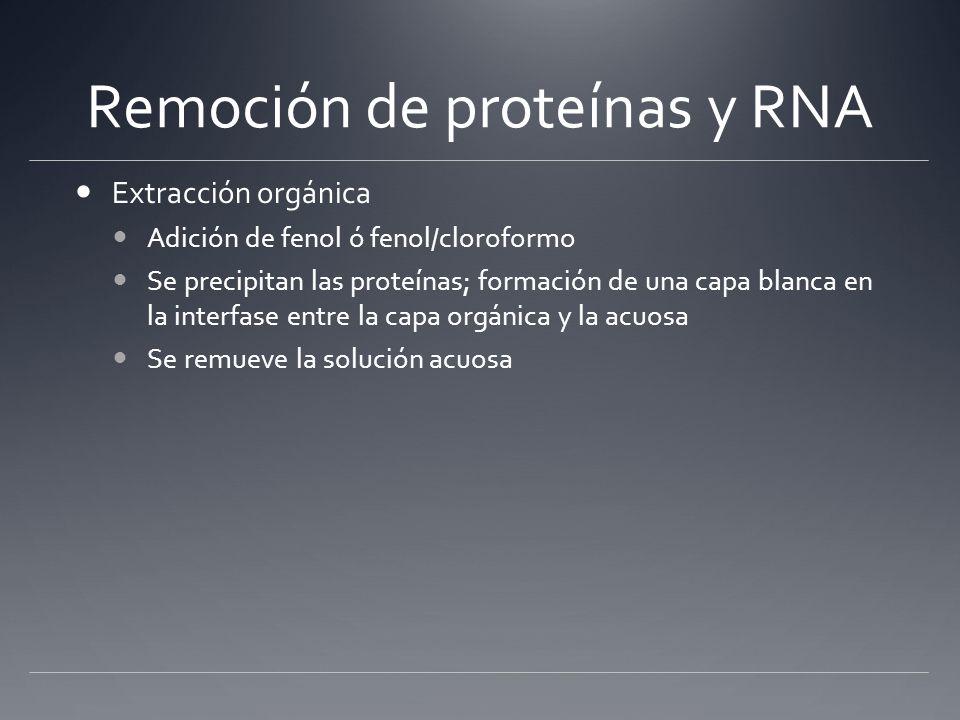 Remoción de proteínas y RNA