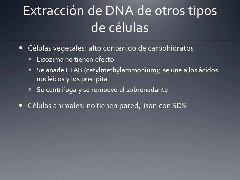 Extracción de DNA de otros tipos de células