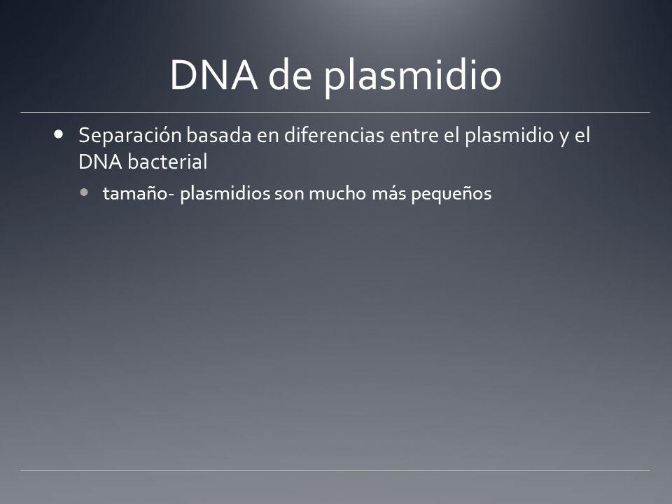 DNA de plasmidio Separación basada en diferencias entre el plasmidio y el DNA bacterial.