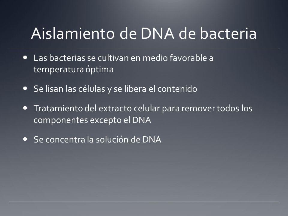 Aislamiento de DNA de bacteria