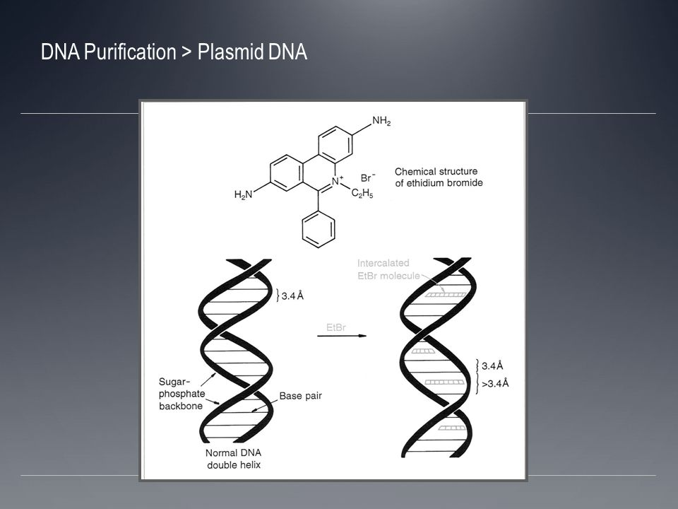 DNA Purification > Plasmid DNA