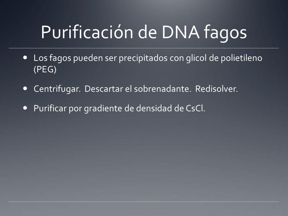 Purificación de DNA fagos