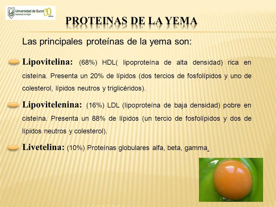 PROTEINAS DE LA YEMA Las principales proteínas de la yema son: