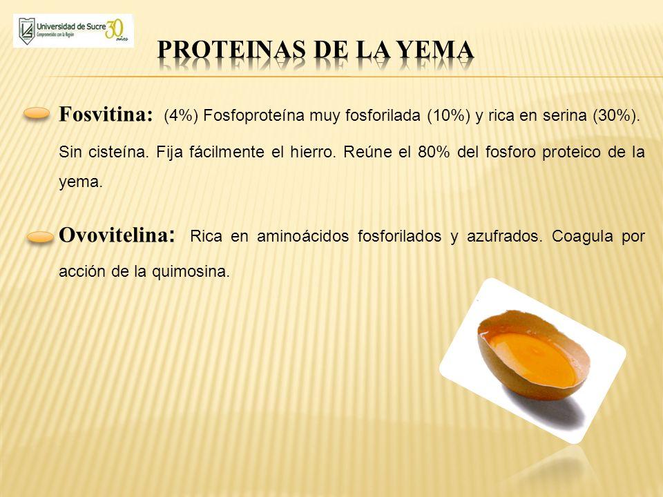 PROTEINAS DE LA YEMA Fosvitina: (4%) Fosfoproteína muy fosforilada (10%) y rica en serina (30%).