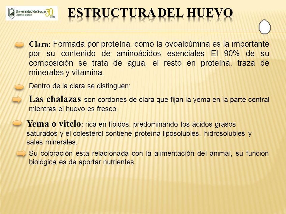 ESTRUCTURA DEL HUEVO