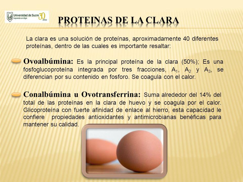 PROTEINAS DE LA CLARA La clara es una solución de proteínas, aproximadamente 40 diferentes proteínas, dentro de las cuales es importante resaltar: