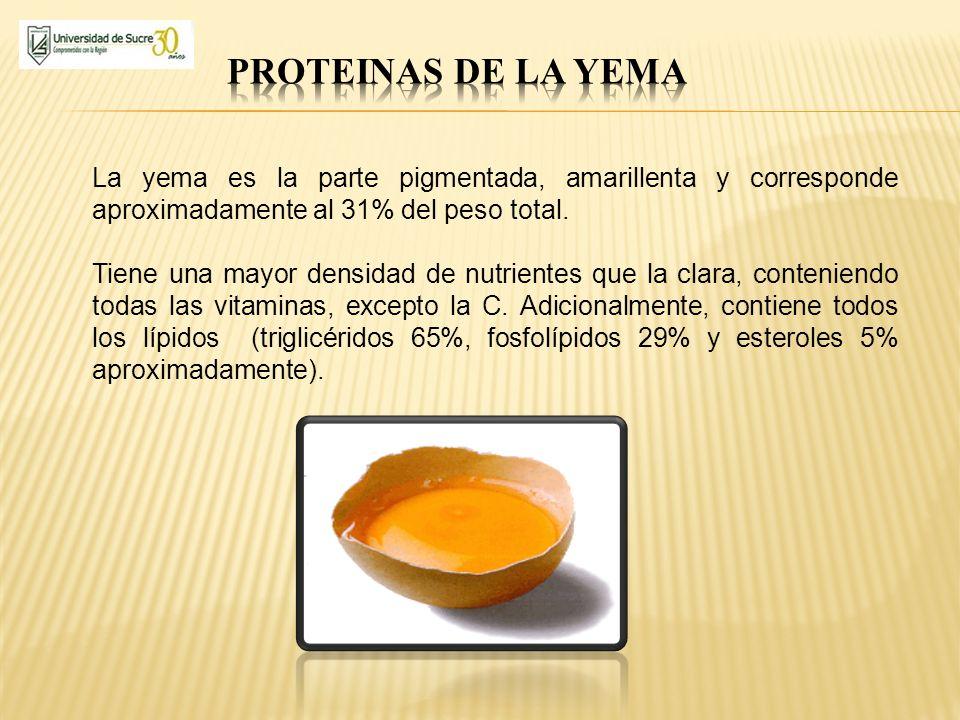 PROTEINAS DE LA YEMA La yema es la parte pigmentada, amarillenta y corresponde aproximadamente al 31% del peso total.
