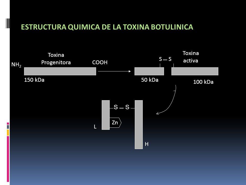 ESTRUCTURA QUIMICA DE LA TOXINA BOTULINICA