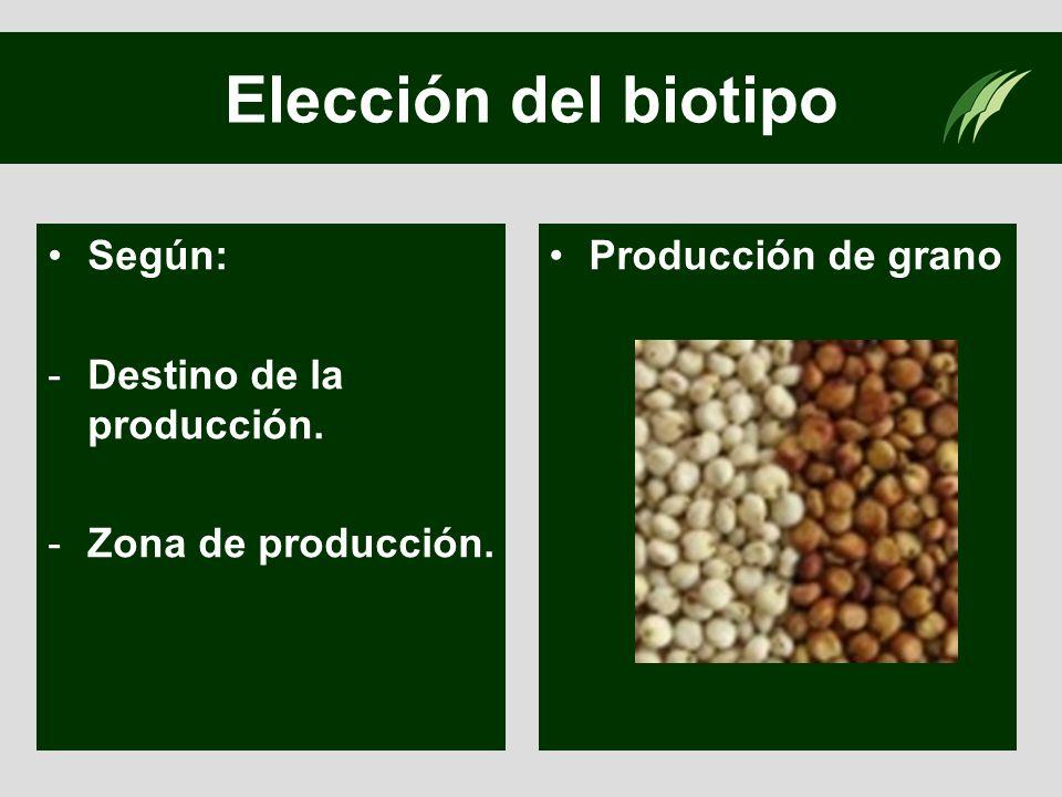 Elección del biotipo Según: Destino de la producción.