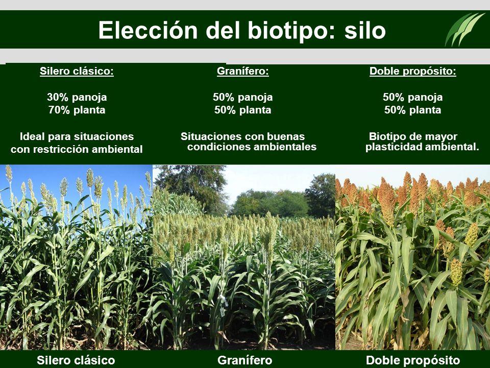 Elección del biotipo: silo