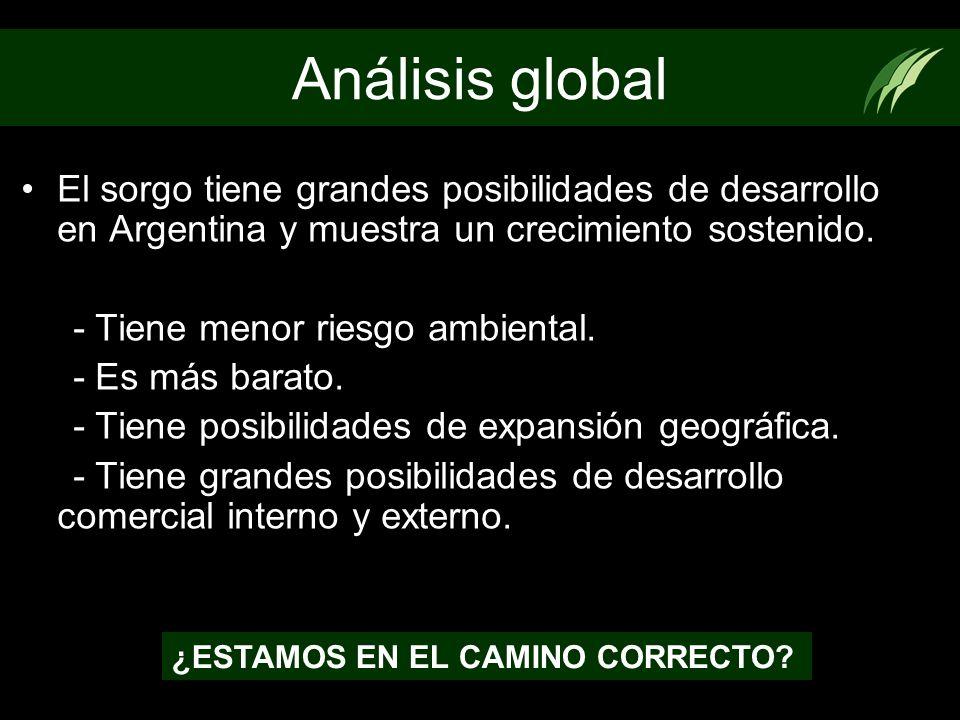 Análisis global El sorgo tiene grandes posibilidades de desarrollo en Argentina y muestra un crecimiento sostenido.
