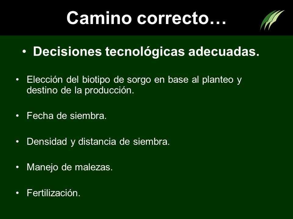 Camino correcto… Decisiones tecnológicas adecuadas.