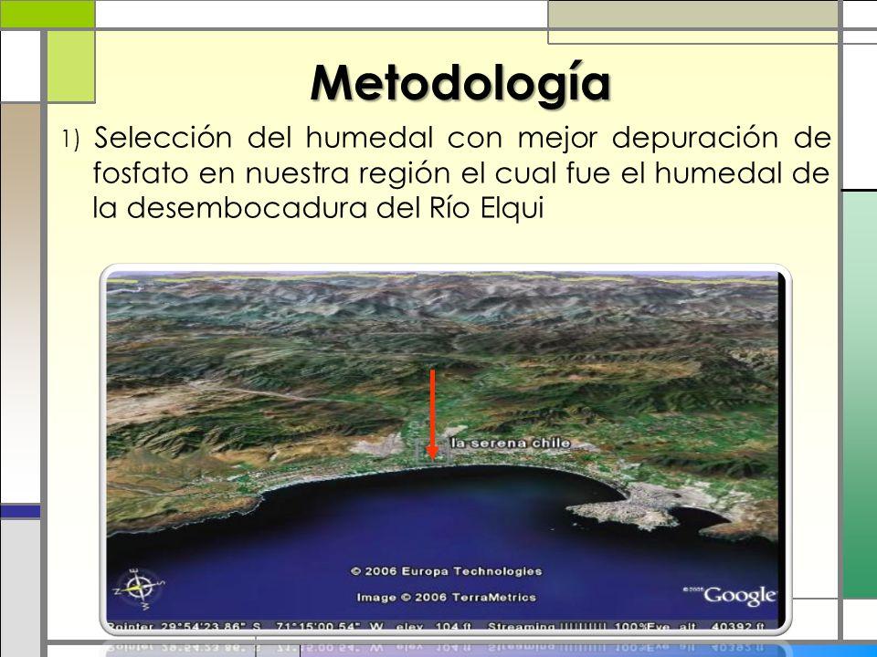 Metodología 1) Selección del humedal con mejor depuración de fosfato en nuestra región el cual fue el humedal de la desembocadura del Río Elqui.