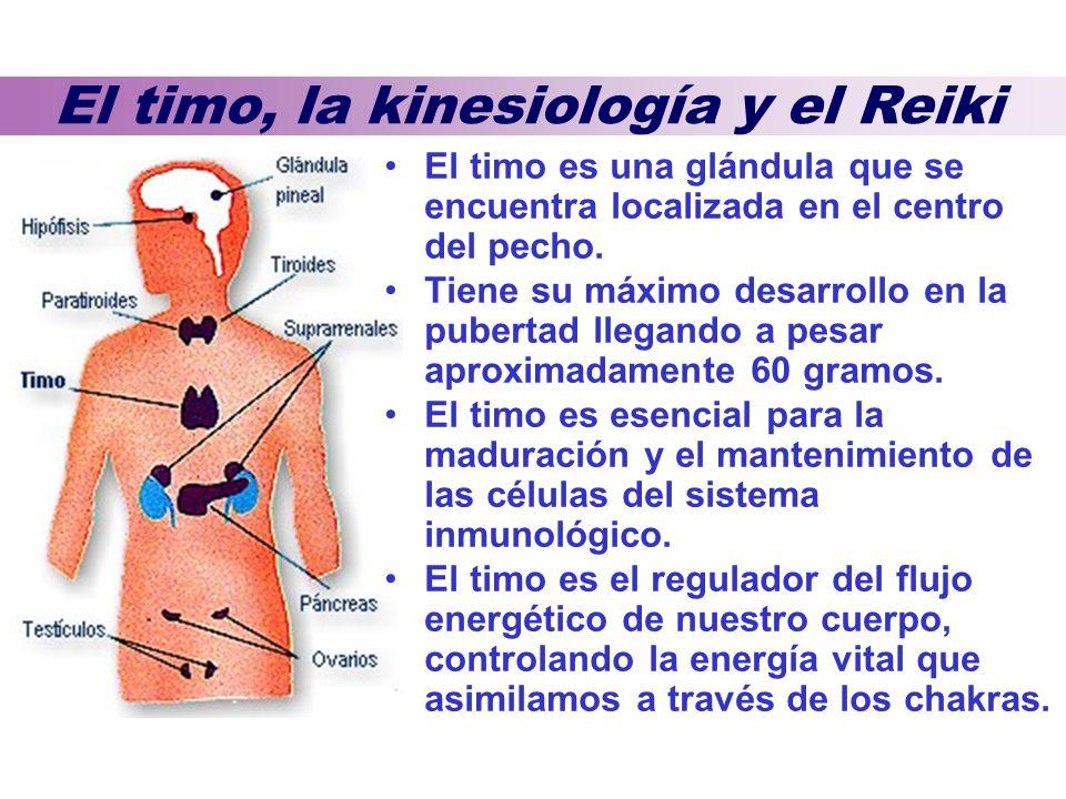 El timo, la kinesiología y el Reiki