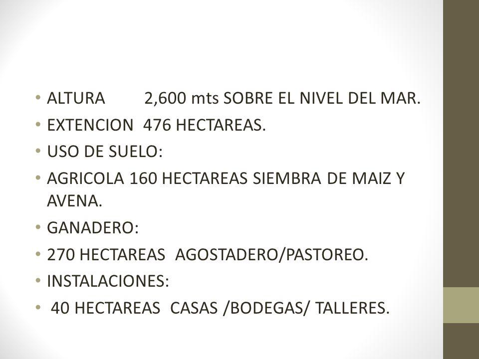 ALTURA 2,600 mts SOBRE EL NIVEL DEL MAR.