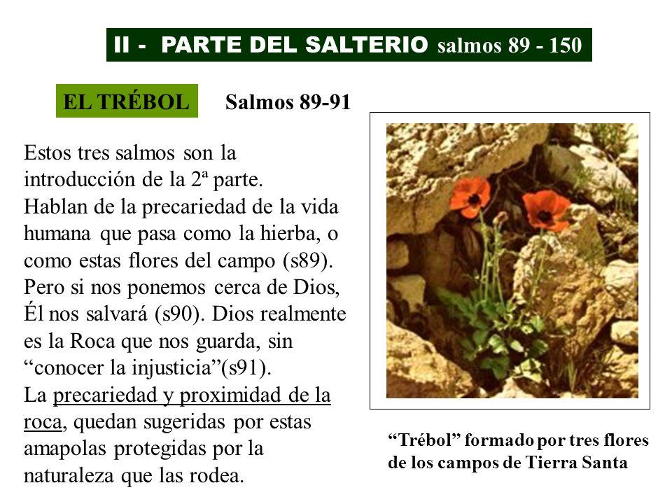 II - PARTE DEL SALTERIO salmos 89 - 150