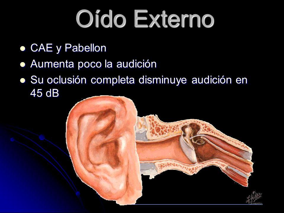 Oído Externo CAE y Pabellon Aumenta poco la audición