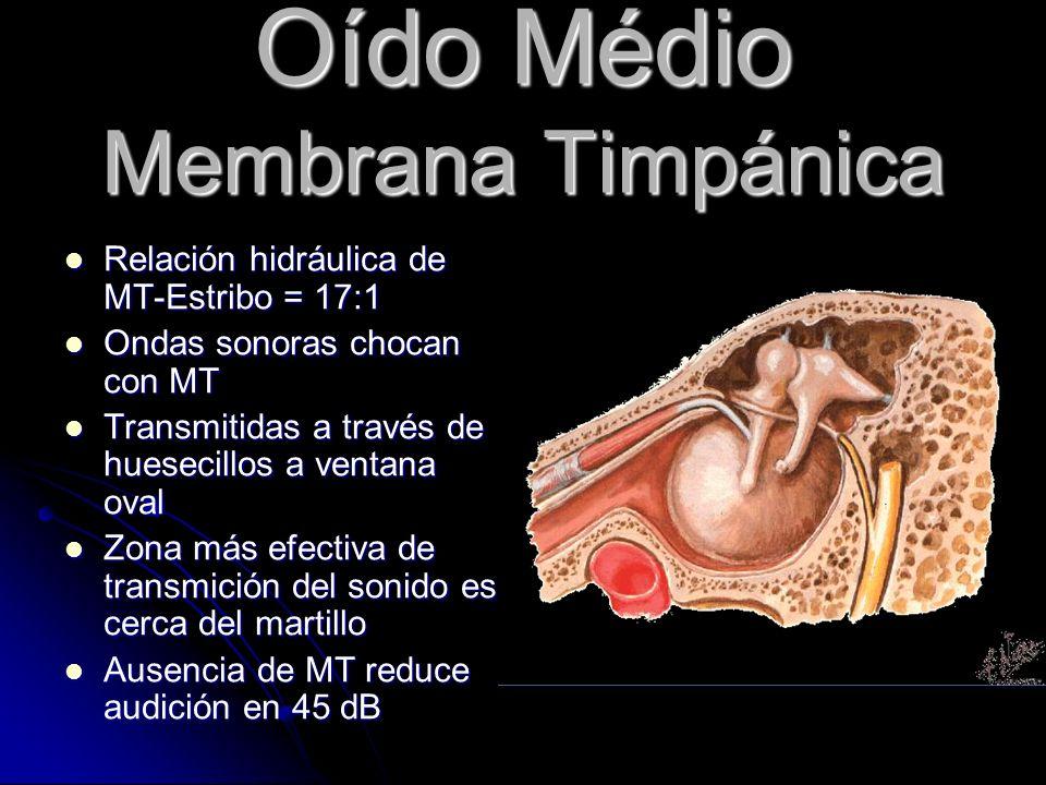 Oído Médio Membrana Timpánica
