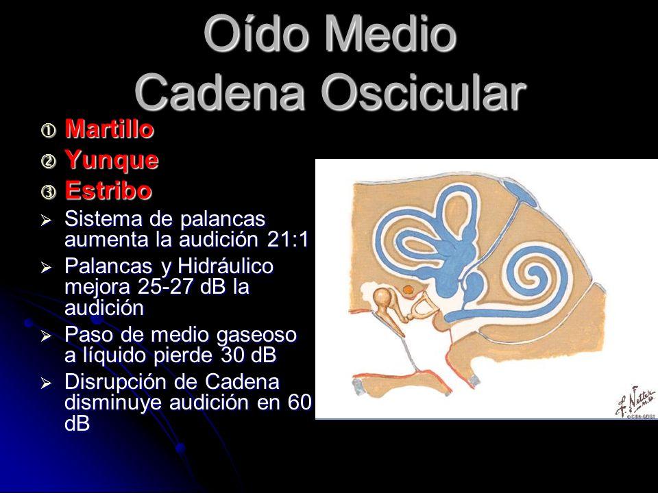 Oído Medio Cadena Oscicular