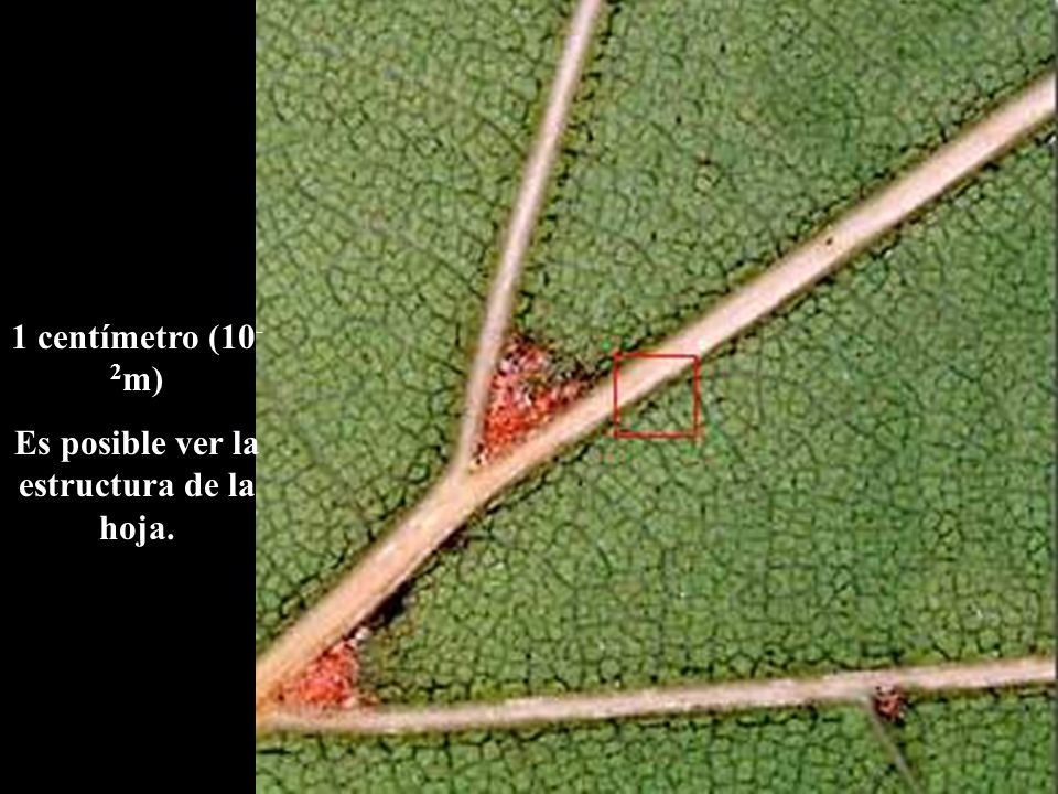 Es posible ver la estructura de la hoja.