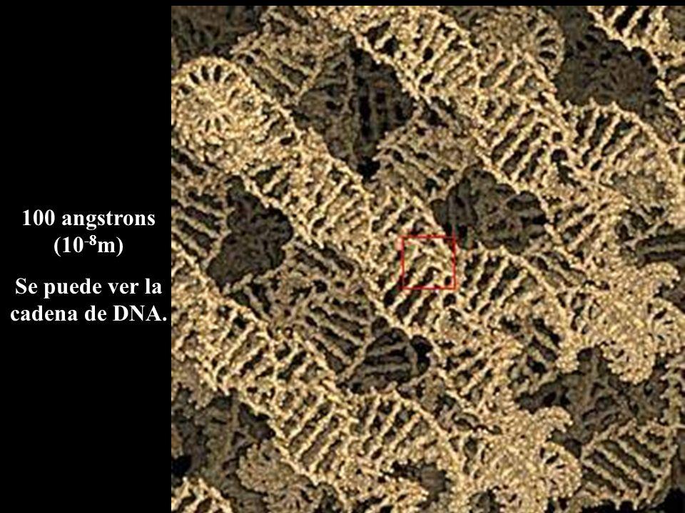 Se puede ver la cadena de DNA.