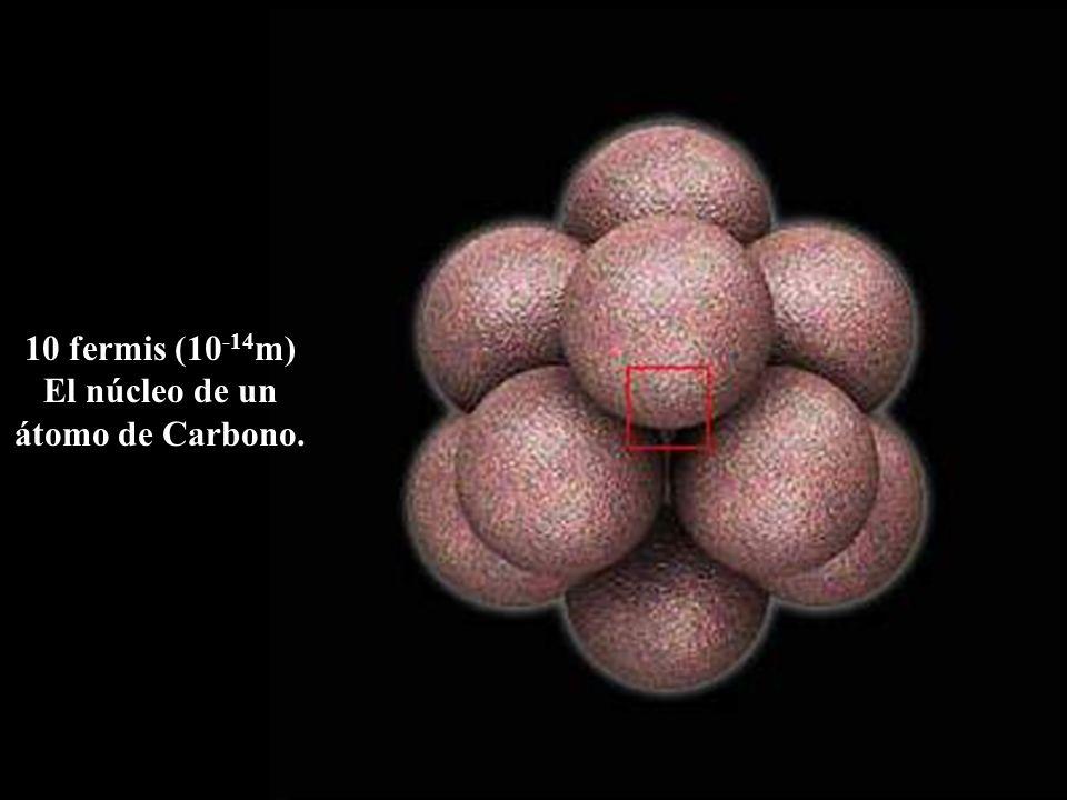 10 fermis (10-14m) El núcleo de un átomo de Carbono.