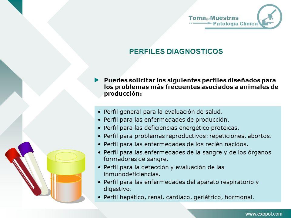 PERFILES DIAGNOSTICOS