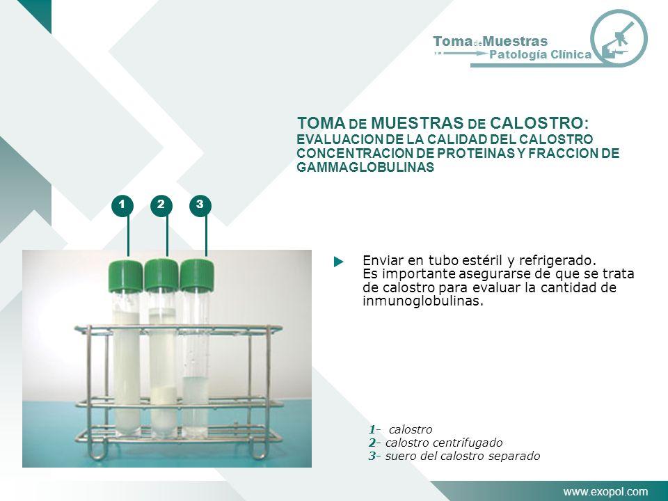 TOMA DE MUESTRAS DE CALOSTRO: EVALUACION DE LA CALIDAD DEL CALOSTRO CONCENTRACION DE PROTEINAS Y FRACCION DE GAMMAGLOBULINAS