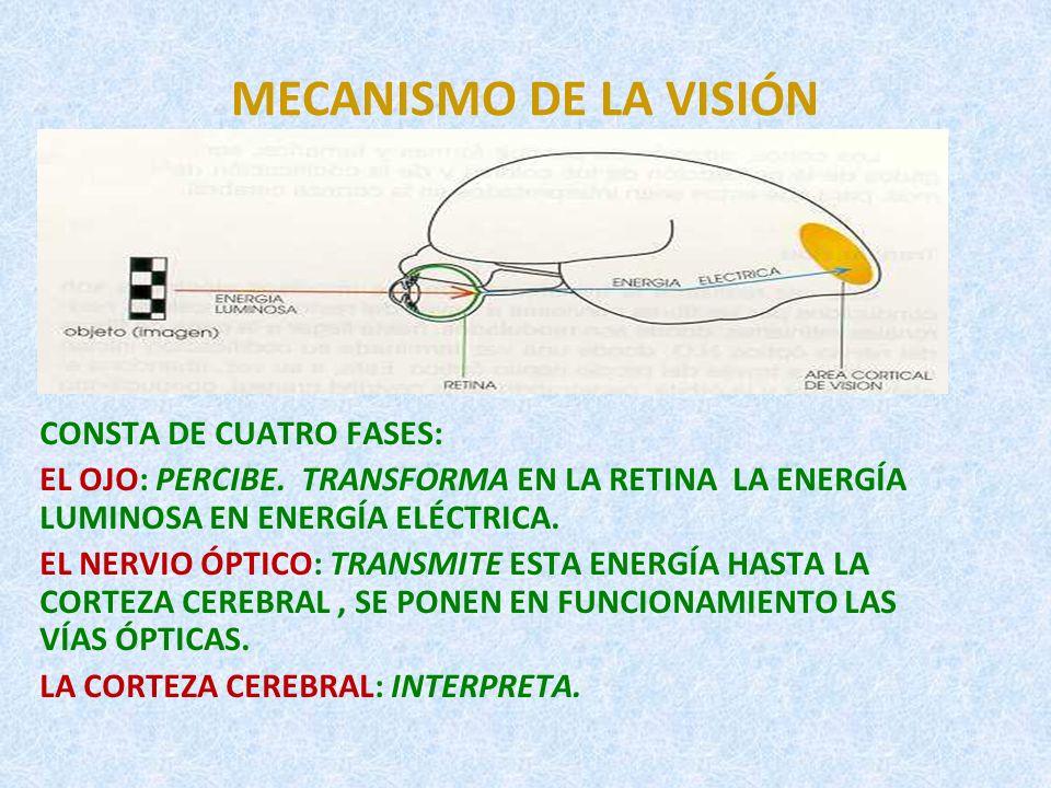 MECANISMO DE LA VISIÓN CONSTA DE CUATRO FASES: