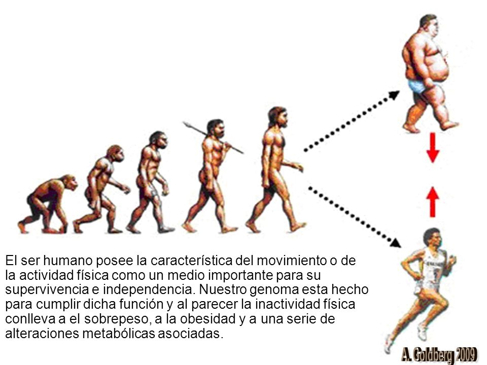 El ser humano posee la característica del movimiento o de la actividad física como un medio importante para su supervivencia e independencia. Nuestro genoma esta hecho para cumplir dicha función y al parecer la inactividad física conlleva a el sobrepeso, a la obesidad y a una serie de alteraciones metabólicas asociadas.