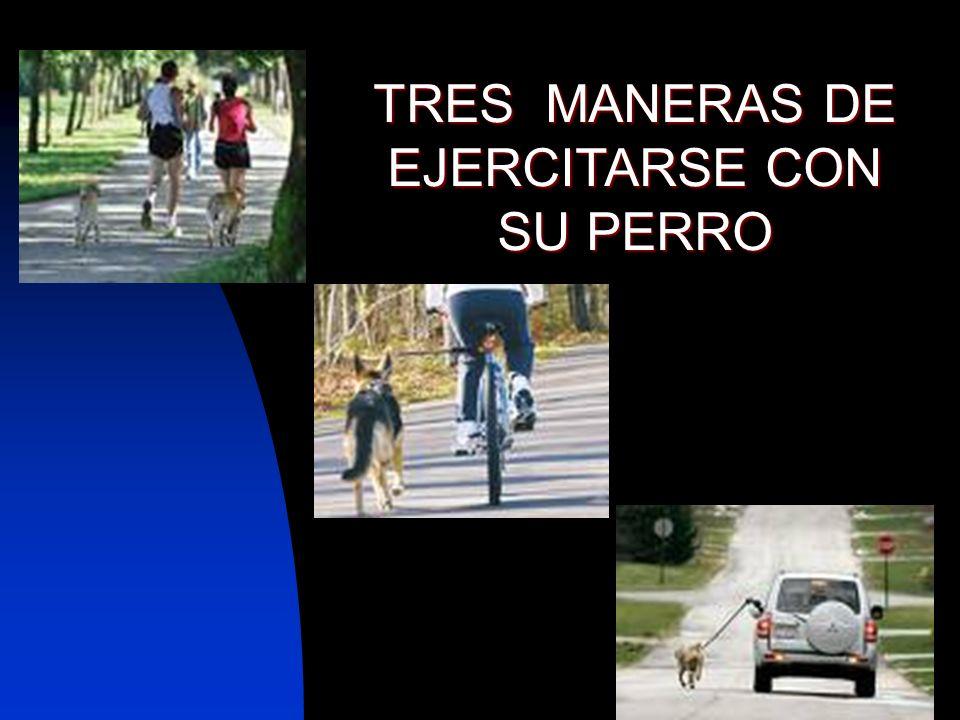 TRES MANERAS DE EJERCITARSE CON SU PERRO