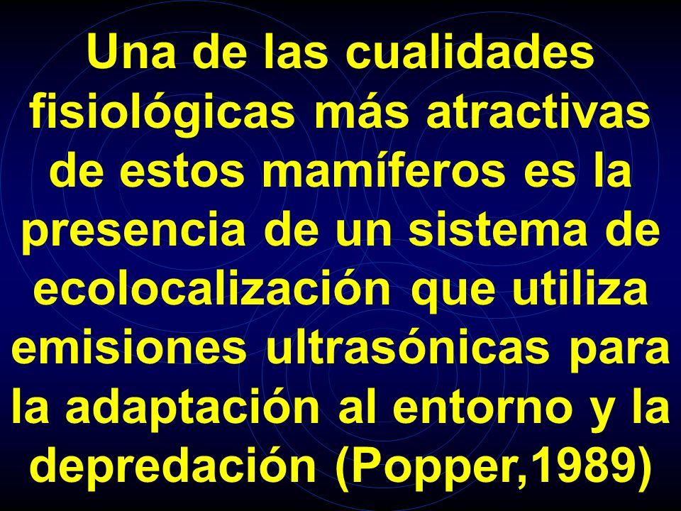 Una de las cualidades fisiológicas más atractivas de estos mamíferos es la presencia de un sistema de ecolocalización que utiliza emisiones ultrasónicas para la adaptación al entorno y la depredación (Popper,1989)