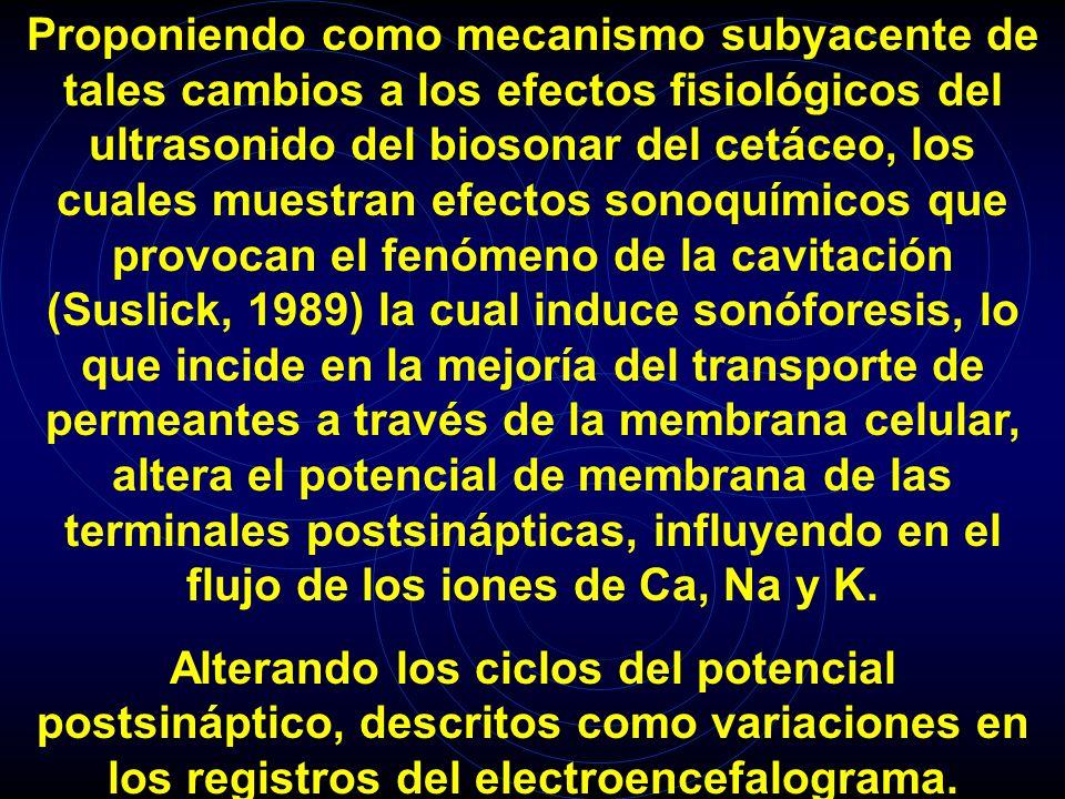 Proponiendo como mecanismo subyacente de tales cambios a los efectos fisiológicos del ultrasonido del biosonar del cetáceo, los cuales muestran efectos sonoquímicos que provocan el fenómeno de la cavitación (Suslick, 1989) la cual induce sonóforesis, lo que incide en la mejoría del transporte de permeantes a través de la membrana celular, altera el potencial de membrana de las terminales postsinápticas, influyendo en el flujo de los iones de Ca, Na y K.