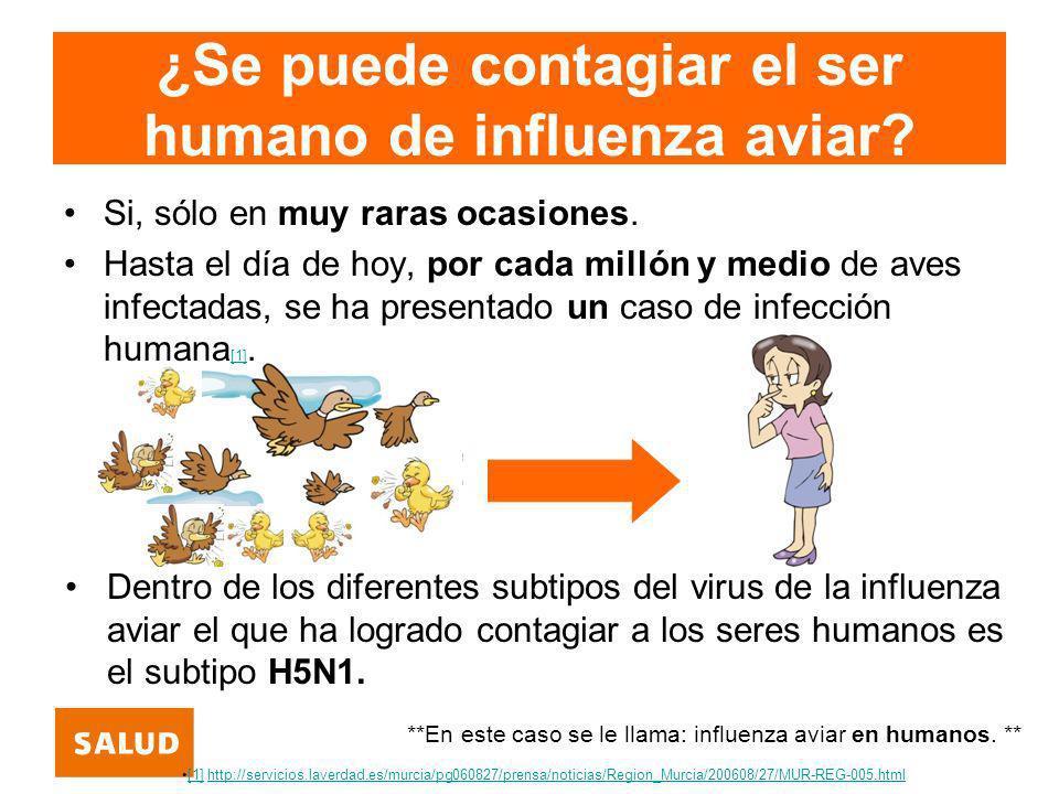 ¿Se puede contagiar el ser humano de influenza aviar