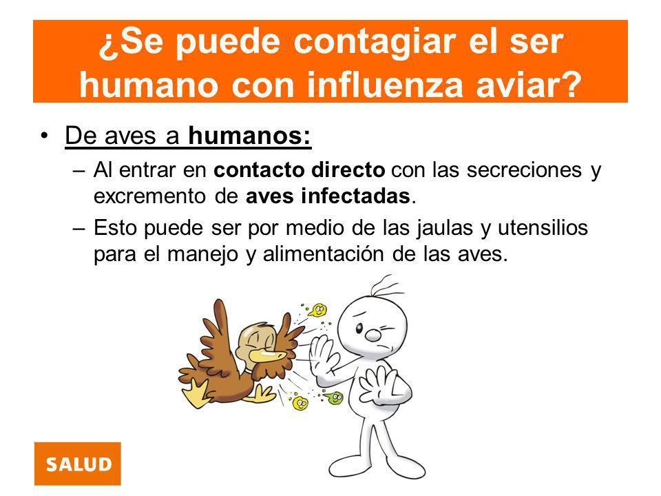 ¿Se puede contagiar el ser humano con influenza aviar