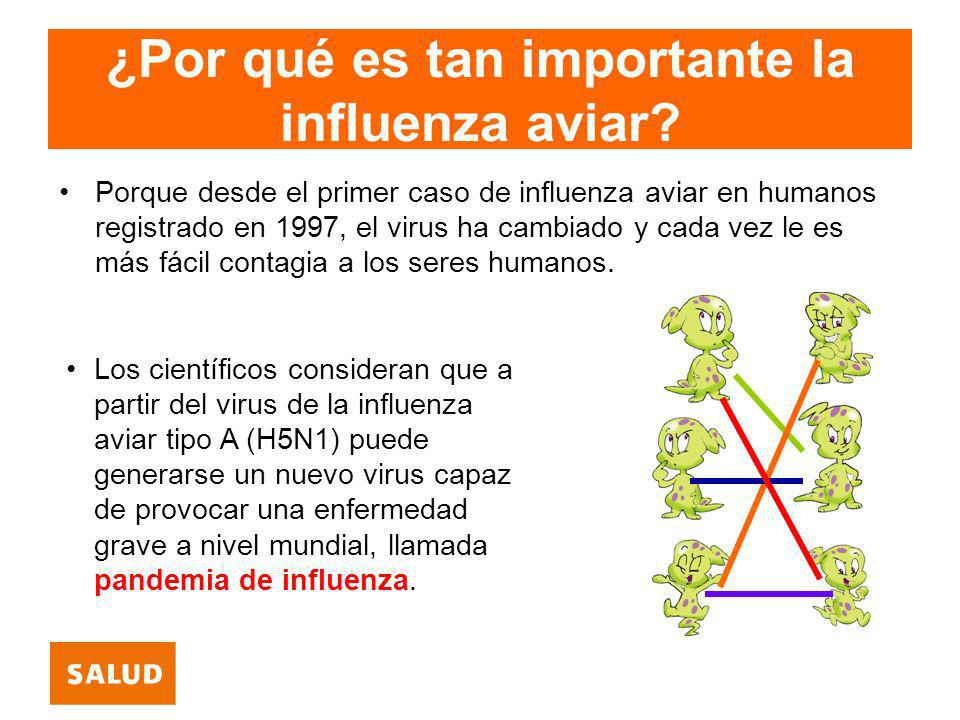 ¿Por qué es tan importante la influenza aviar