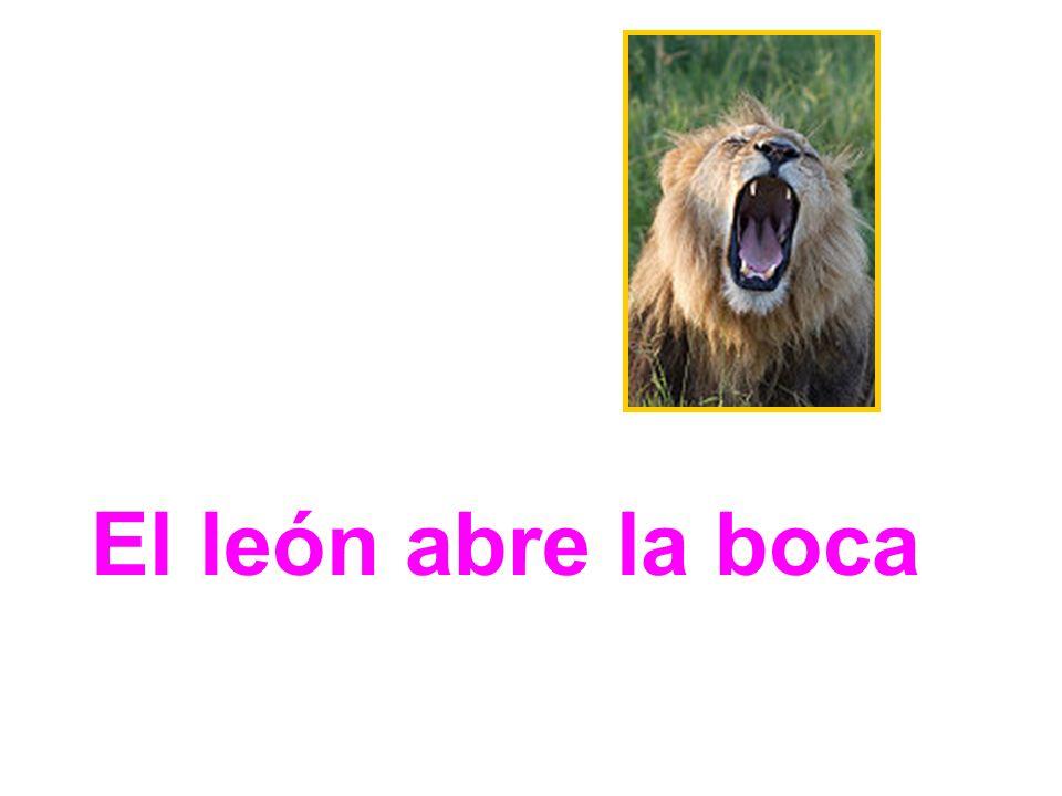 El león abre la boca