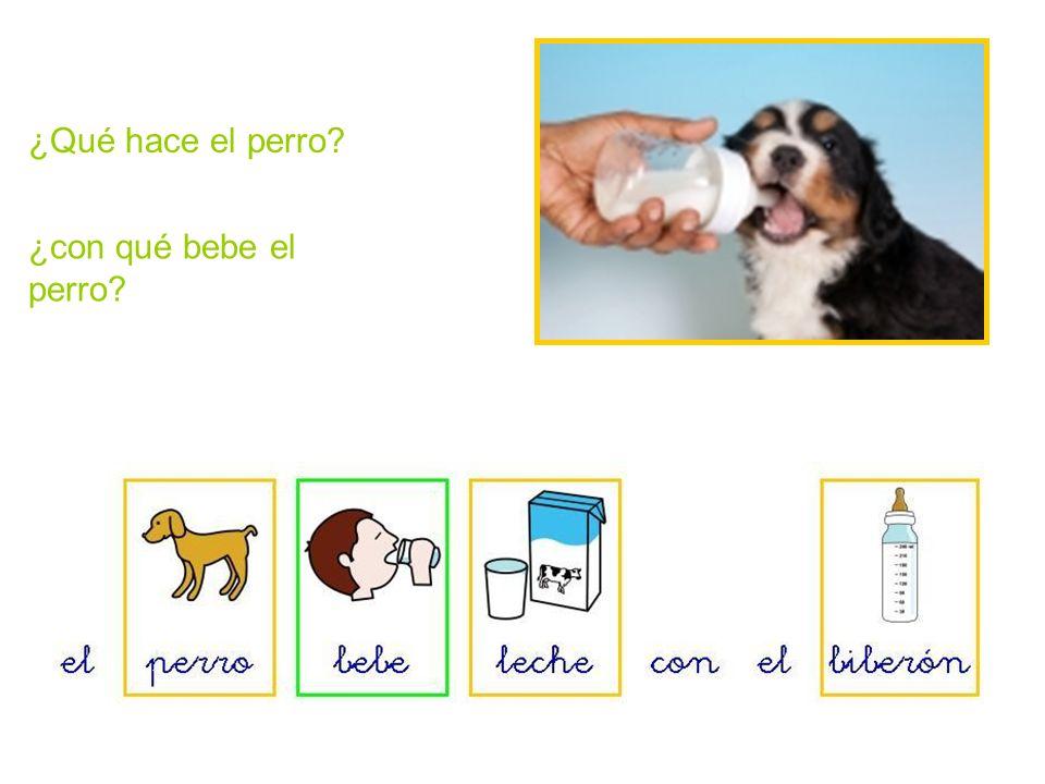 ¿Qué hace el perro ¿con qué bebe el perro