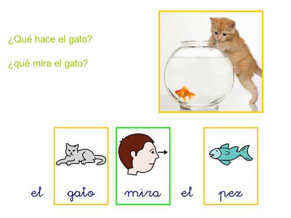 ¿Qué hace el gato ¿qué mira el gato
